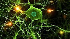 عدم-تعادل-شیمیایی-در-مغز